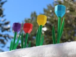 tulips thing